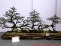 四川:杜甫诗意盆景展