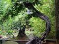 四川:大邑兰妹苑倾力打造川派盆景文化产业