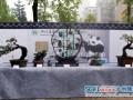 """四川省首届泸州""""农信杯""""盆景精品展今日开展"""