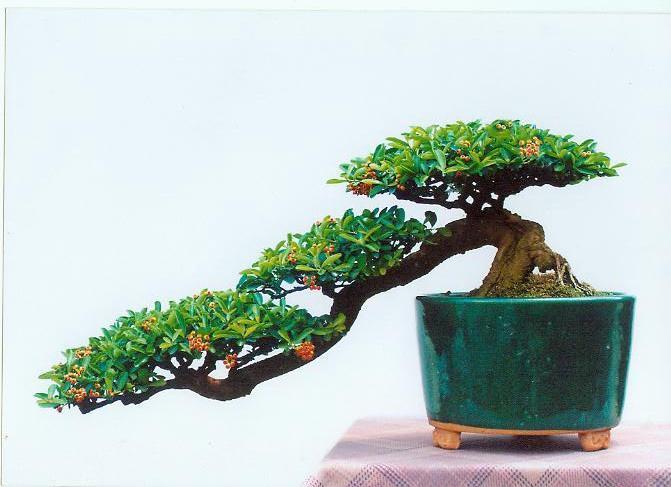 """""""超级盆景""""——贵州荔波小七孔景区(组图)"""