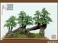 云南盆景协会出台《云南省盆景艺术大师评审标准》
