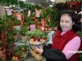 图:台湾业者推萝卜盆景迎新春