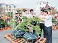 [图文]江苏省首次进口台湾盆景运抵常