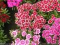 王逸良:发展庭院经济 种植鲜花盆景月赚三千