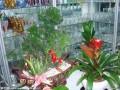 过节火了花卉市场 鲜花盆景 市民各有所爱