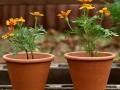 陈村花卉世界将举行国际盆景雅石博览会