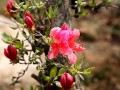 花卉盆景展在西南植物园开展