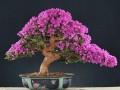 歙县花卉盆景产业助推乡村旅游发展