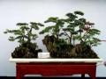 垫江:牡丹文化节花卉盆景奇石书画展即将开展
