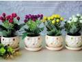 春暖花开 水仙风信子这样的小盆景植物和花卉受欢迎
