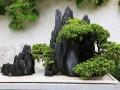 水石类盆景制作-太湖石