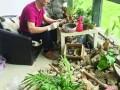 桂花社区两位中草药达人教你制作健康草药盆景