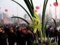东莞盆景协会为大家备的兰花盆景展览
