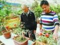 郑州选育出新品月季石榴 制作盆景效果更好