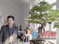 盆景雅石世界冠军120年老榕树 新春亮相鹭岛