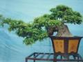 一向喜欢花花草草的我 突然迷上了玩微型榕树盆景。