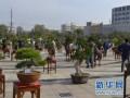 2014山东省沂源桂花盆景艺术展览开幕