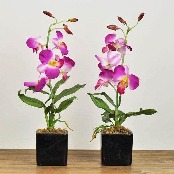 家庭盆栽花卉的室内管理技术