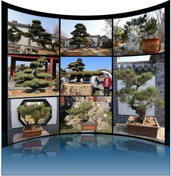 小盆景做成大产业——记临沂市润松园园林有限公司董事长