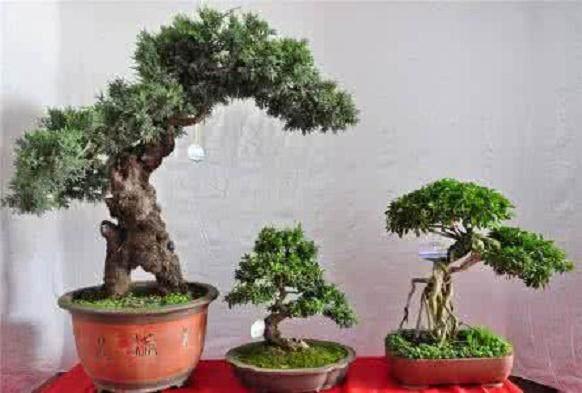 云南盆景赏石协会榜上有名