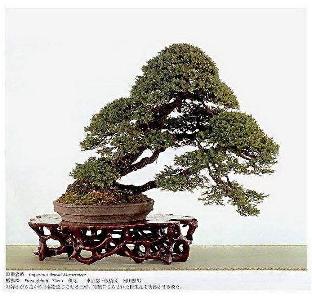 日本高松盆景交流团访问苏州