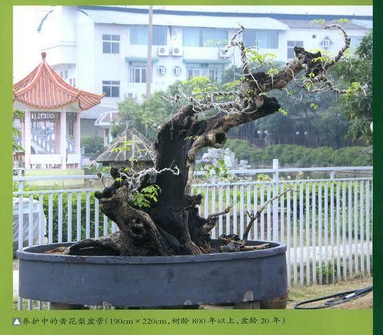 缘自然艺术苑是广西南宁鲁豹先生的私家盆景园