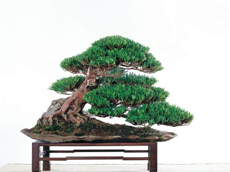 2013国际盆景大会扬州宣言