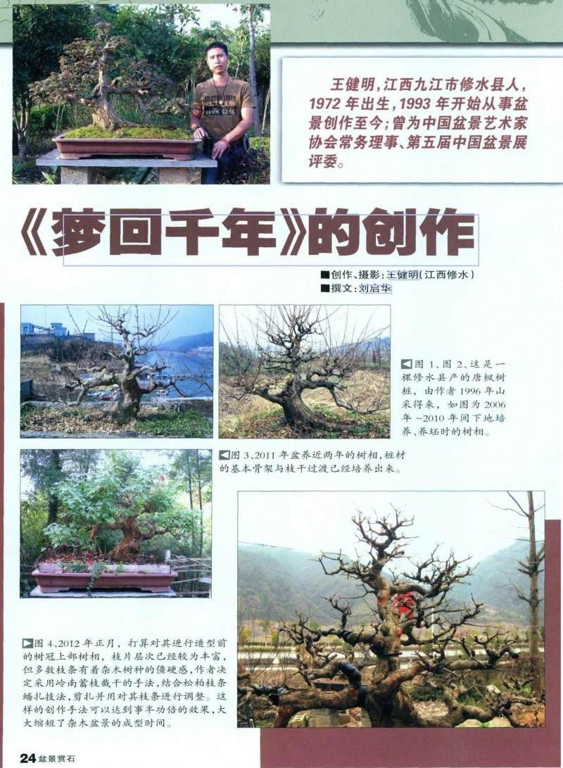 图解盆景的大飘枝造型手法