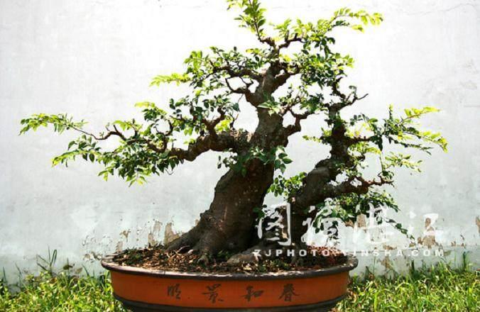 2013年 扬州国际盆景大会