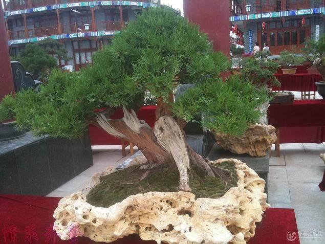 山东费县首届盆景·园艺博览会在费县龙门广场隆重开幕