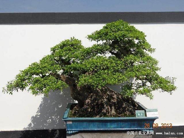 无棣县有一处占地10亩的石缘盆景批发市场