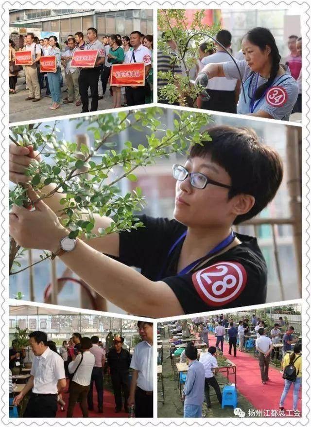 扬州盆景制作职业技能竞赛在我区举办