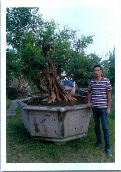 著名岭南盆景艺术家--杜顺添先生