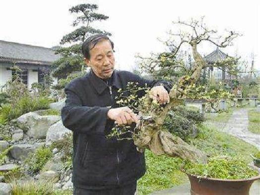 75岁的国家级盆景大师--胡世勋