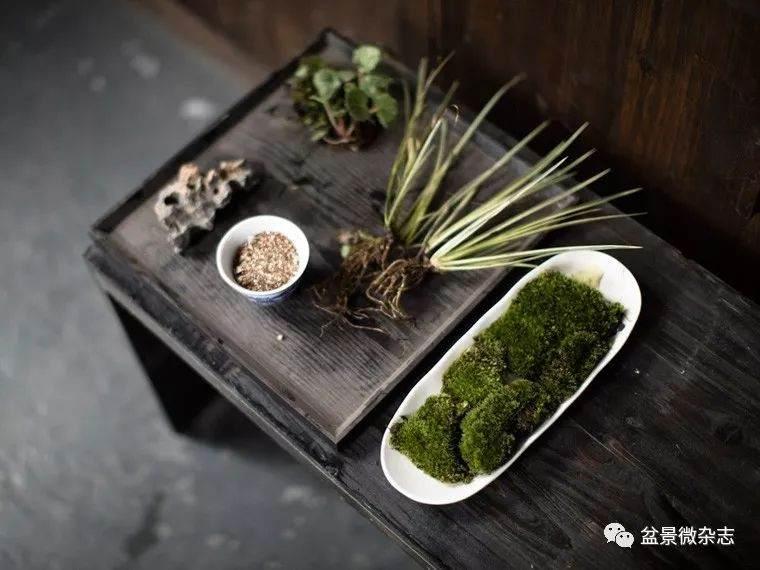 山水盆景设计师--吴俊伟
