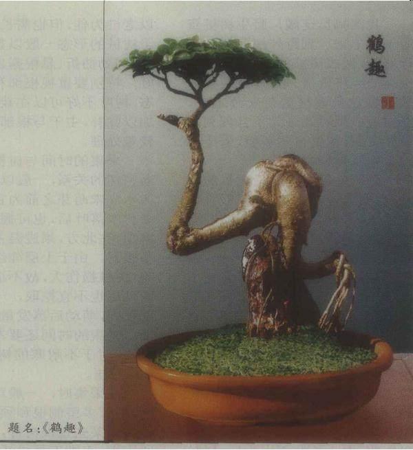 榕树盆景的扦插繁殖与整体造型