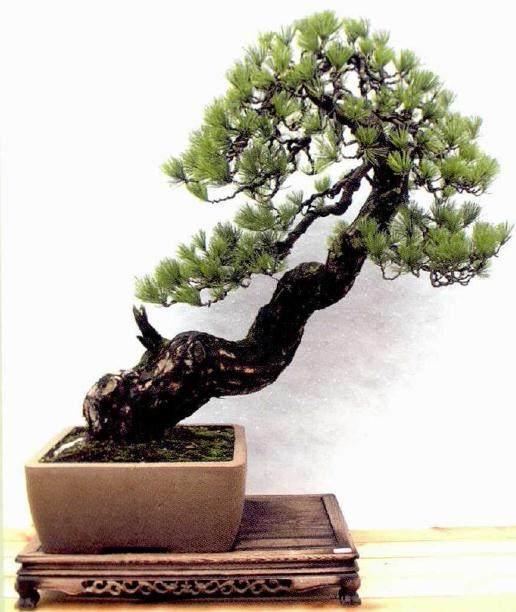 温州市第十二届盆景博览会在苍南金乡镇成功举办