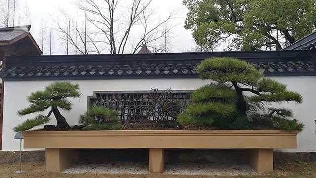 上海植物园盆景园改建完毕 很多园内的老景观都被调整