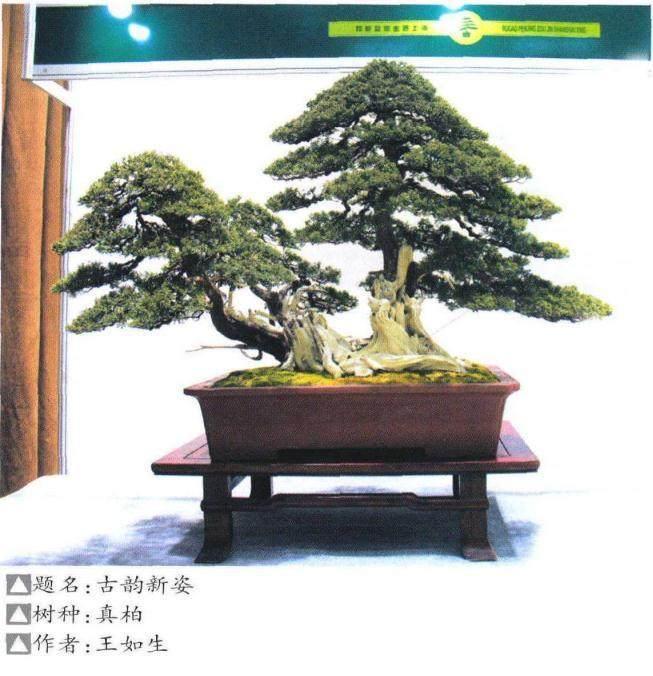 如皋市花木盆景产业联合会在上海植物园隆重开幕