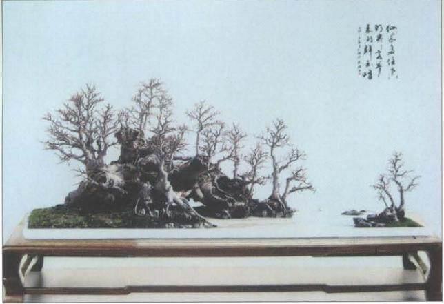 黄就伟盆景艺术于2005年获粤港澳台盆景艺术汇展金奖