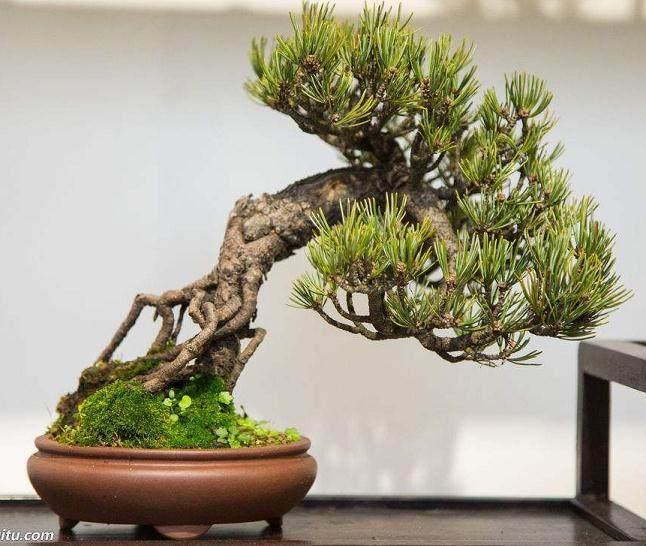 自《花木盆景———盆景赏石版》2007年初改版以来