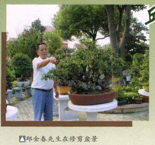 邱先生也众望所归地被推选为镇江盆景协会会长