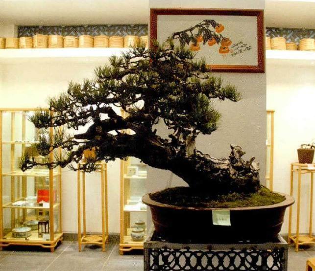湖北省花木盆景协会在昌恩园举办迎春座谈会