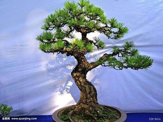 上海植物园盆景园植物景观改造提升研究