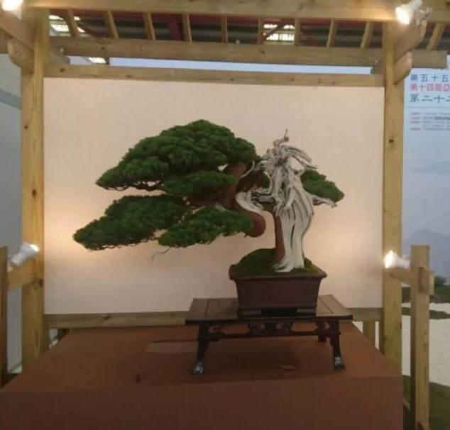 晋江盆景协会会员们在参观李仲鸿的制作过程后
