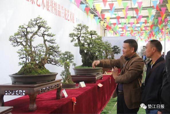 重庆市第十二届盆景艺术展在牡丹樱花世界景区举行