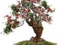 果树盆景的发芽培育及应用