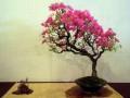 矮形紫薇老桩盆景的发芽培育技术