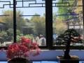 镇江市第五届家庭花卉盆景展