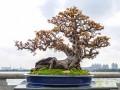 中国岭南盆景观赏石精品展在广州隆重开幕